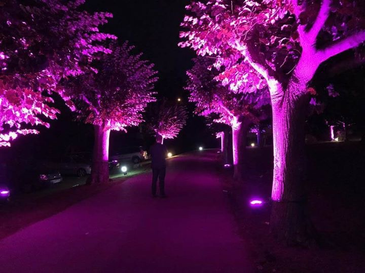 Camino de entrada iluminado en rosa